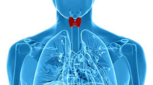 Hypertyreóza, štítna žlaza,hormóny, endokrinológia