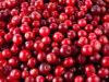 infekcia močových ciest, antioxidant