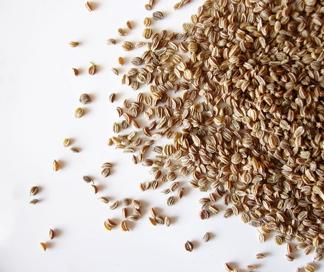 zeler, semienka, krvný tlak