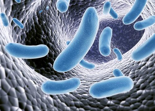 mikrobióm, črevo, črevné baktérie, probiotiká