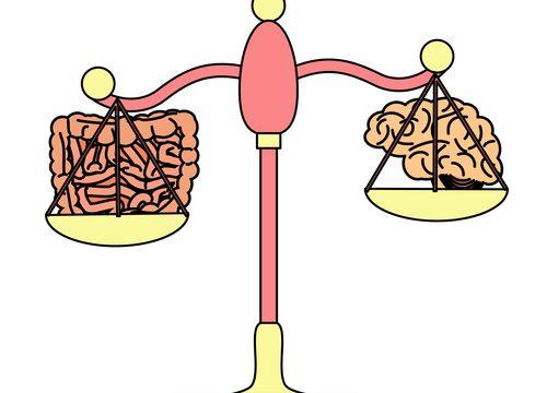 čerevo, mozog, rozhodovanie